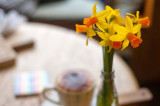 5th April 2016  mini daffs