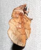 7687, Lappet Moth