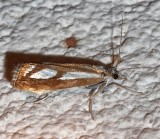 5408, Catoptria latiradiellus, Three-spotted Crambus
