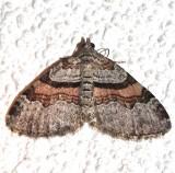 7368, Xanthorhoe labradorensis, Labrador Carpet