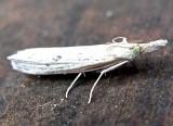 5382, Neodactria murellis