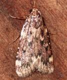 5518,  Grease Moth