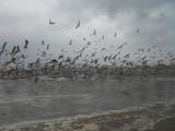 Gullfest in Noordwijk aan Zee