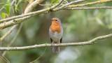 Ireland - Birds