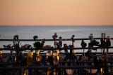 Ironman 70.3 World Championships ~ Sunshine Coast Australia