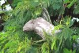 2016033601 Sloth Puerto Maldonado.jpg