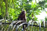 2016034205 Spider Monkey Lake Sandoval.jpg