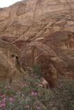 Jordan Petra 2013 2145 Wadi Muthlim.jpg