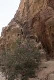 Jordan Petra 2013 2146 Wadi Muthlim.jpg