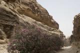Jordan Petra 2013 2151 Wadi Muthlim.jpg