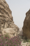 Jordan Petra 2013 2154 Wadi Muthlim.jpg