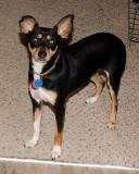 My Dog ROX