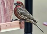 Birds @ Feeder