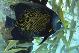 Bonaire Fish 2013