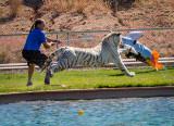 Chalet at Tiger Splash