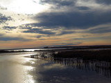 Chesapeake Beauty