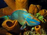 Cozumel Underwater April 2014