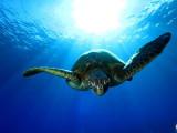 Maui Underwater