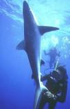Shark Story NatGeo