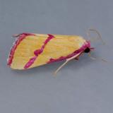 8480 Ernestine's Moth – Phytometra ernestinana
