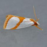 5465  Curve-lined Argyria  - Vaxi auratella