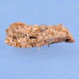 3767   Cochylis aurorana