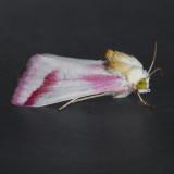 Noctuidae (10218+)