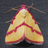 Noctuidae (8322 - 8769)