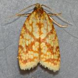 3695 Sparganothis Fruitworm - Sparganothis sulfureana