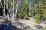Eucalyptus leaf litter moth search