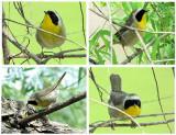 Redundant Bird Photos