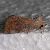 8528 Small Necklace - Hypsoropha hormos