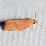 3593  Woodgrain Leafroller - Pandemis lamprosana