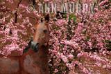 Santa Fe Spring