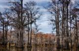 Caddo Lake - March 2013