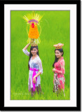 At the rice field 2