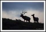 Teton Wildlife