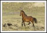 Wild Horses - Wyoming