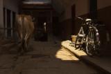 Bike and cow.jpg