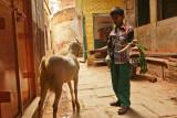 Feeding the goat.jpg