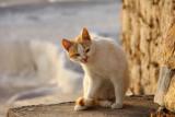 Cat Pamukkale.jpg
