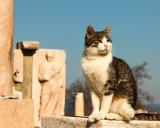 Ephesus cat.jpg