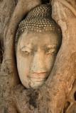Buddha in tree portrait.jpg
