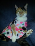 Snickers in a dress