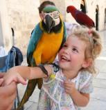 Dubrovnik - The bird