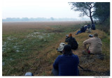@Workshop-Shooting sarus crane