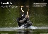 @Wild Planet magazine