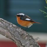 Rare birds in Italy