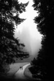 Between trees I