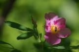 Insecte sur Fleur